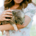 A guest holds a piglet at a baby shower petting zoo.