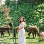 A guest poses in front of alpacas at a baby shower petting zoo.